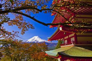 秋の新倉富士浅間神社の五重塔と富士山の写真素材 [FYI04646119]