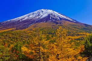 奥庭から見た富士山とカラマツの紅葉の写真素材 [FYI04646140]