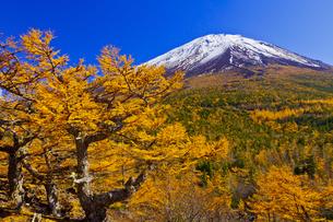 奥庭から見た富士山とカラマツの紅葉の写真素材 [FYI04646143]