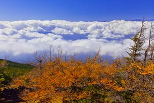 富士山5合目の奥庭から見た雲海とカラマツの紅葉の写真素材 [FYI04646147]