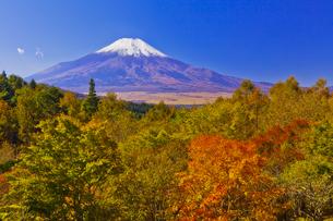 二十曲峠の紅葉と富士山                  の写真素材 [FYI04646153]