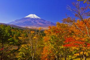 二十曲峠の紅葉と富士山の写真素材 [FYI04646155]