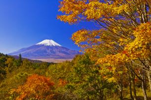 二十曲峠の紅葉と富士山の写真素材 [FYI04646156]