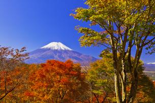 二十曲峠の紅葉と富士山の写真素材 [FYI04646157]