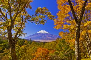 二十曲峠の紅葉と富士山の写真素材 [FYI04646158]
