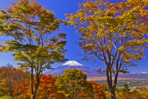 二十曲峠の紅葉と富士山の写真素材 [FYI04646159]