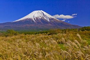 朝霧高原から見た富士山とススキの写真素材 [FYI04646162]