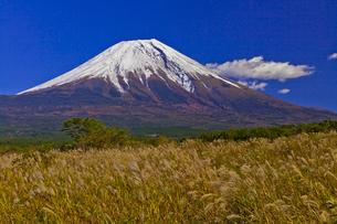 朝霧高原から見た富士山とススキの写真素材 [FYI04646163]
