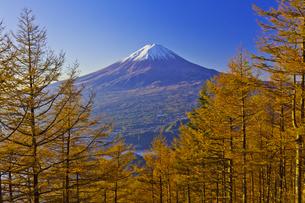 新道峠から見たカラマツの紅葉と秋の富士山の写真素材 [FYI04646164]