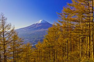 新道峠から見たカラマツの紅葉と秋の富士山の写真素材 [FYI04646165]