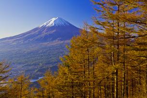 新道峠から見たカラマツの紅葉と秋の富士山の写真素材 [FYI04646166]