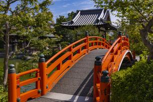 神泉苑 法成橋の写真素材 [FYI04647593]
