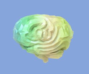 ワイヤーフレーム付きのローポリの頭脳の側面図。人工知能のコンセプトイメージの写真素材 [FYI04648385]