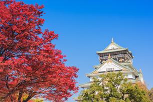 紅葉と大阪城の写真素材 [FYI04656247]