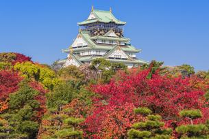 紅葉と大阪城の写真素材 [FYI04656279]