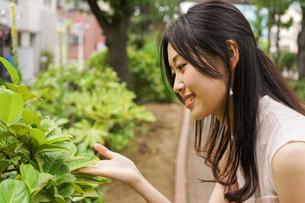 植物を鑑賞する若い女性の写真素材 [FYI04657047]