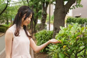 植物を鑑賞する若い女性の写真素材 [FYI04657051]