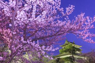 桜咲く丸岡城の写真素材 [FYI04657944]