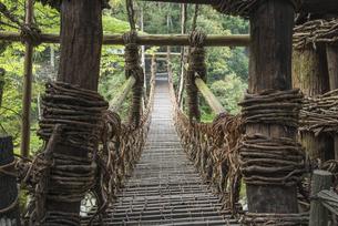 かずら橋の写真素材 [FYI04658246]