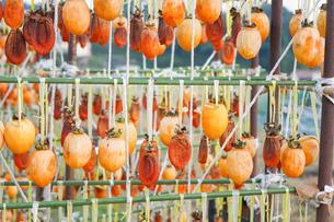 干し柿の写真素材 [FYI04659503]