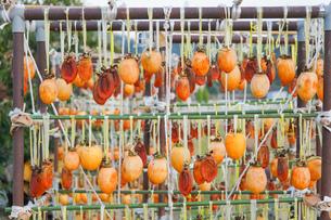 干し柿の写真素材 [FYI04659504]