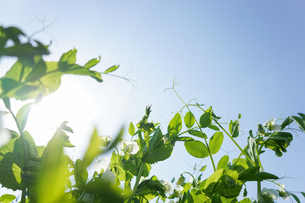 新緑・空の写真素材 [FYI04659529]