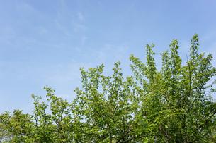 新緑・空の写真素材 [FYI04659539]