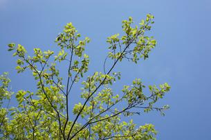 新緑・空の写真素材 [FYI04659541]