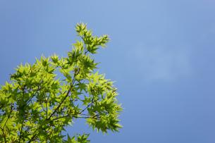 新緑・空の写真素材 [FYI04659545]