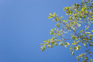 新緑・空の写真素材 [FYI04659546]