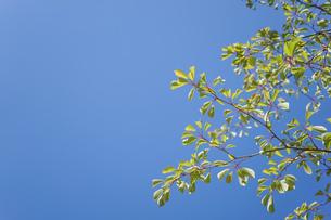 新緑・空の写真素材 [FYI04659548]