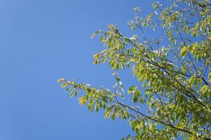 新緑・空の写真素材 [FYI04659549]