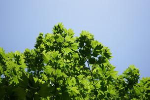 新緑・空の写真素材 [FYI04659551]