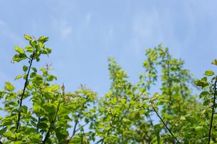 新緑・空の写真素材 [FYI04659594]