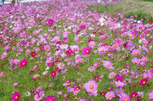 田舎 風景の写真素材 [FYI04659624]