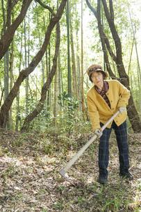 タケノコ刈りをする高齢の女性の写真素材 [FYI04659642]