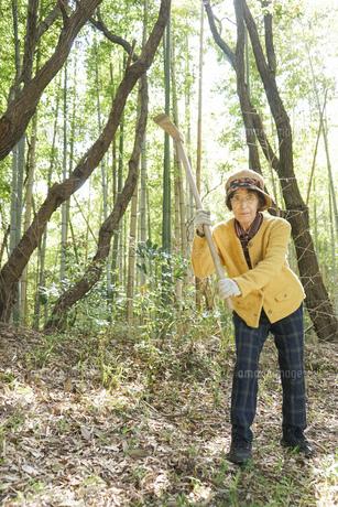 タケノコ刈りをする高齢の女性の写真素材 [FYI04659656]