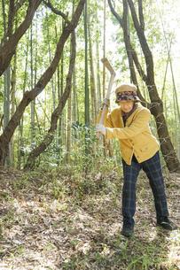 タケノコ刈りをする高齢の女性の写真素材 [FYI04659657]
