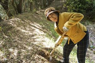タケノコ刈りをする高齢の女性の写真素材 [FYI04659658]