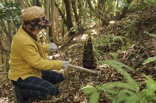 タケノコ刈りをする高齢の女性の写真素材 [FYI04659662]