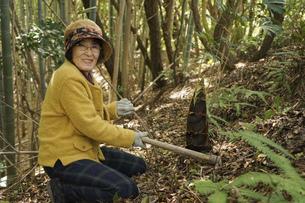 タケノコ刈りをする高齢の女性の写真素材 [FYI04659663]