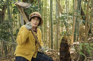 タケノコ刈りをする高齢の女性の写真素材 [FYI04659665]