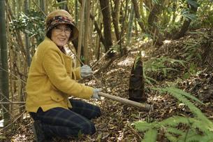 タケノコ刈りをする高齢の女性の写真素材 [FYI04659666]