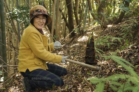 タケノコ刈りをする高齢の女性の写真素材 [FYI04659667]