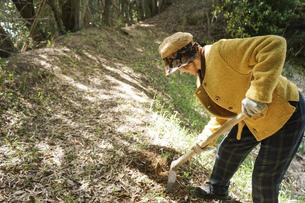 タケノコ刈りをする高齢の女性の写真素材 [FYI04659670]