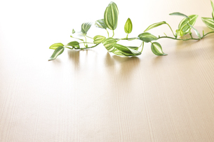 背景素材 板と葉っぱの写真素材 [FYI04659681]