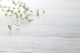 白木と観葉植物(背景素材)の写真素材 [FYI04659691]