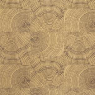 背景素材-木目素材の写真素材 [FYI04659899]