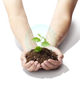 手のひらの中の植物-新芽-若葉-成長-未来-パワーの写真素材 [FYI04660213]