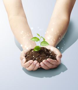 手のひらの中の植物-新芽-若葉-成長-未来-パワーの写真素材 [FYI04660218]